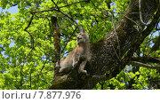Купить «tree wildlife animals cat lynx», фото № 7877976, снято 17 июня 2019 г. (c) PantherMedia / Фотобанк Лори