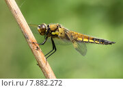 Купить «nature animal animals insect insects», фото № 7882272, снято 20 сентября 2019 г. (c) PantherMedia / Фотобанк Лори