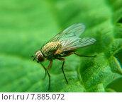 Купить «close up macro fly insect», фото № 7885072, снято 20 сентября 2019 г. (c) PantherMedia / Фотобанк Лори