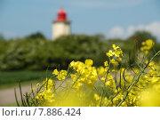 Купить «green yellow grass meadow soft», фото № 7886424, снято 25 апреля 2019 г. (c) PantherMedia / Фотобанк Лори