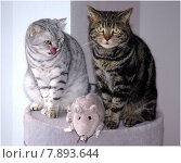 sitting two grey gray sit. Стоковое фото, фотограф Otto Beigelbeck / PantherMedia / Фотобанк Лори