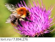 Купить «nature plant animals increase insects», фото № 7894276, снято 17 июня 2019 г. (c) PantherMedia / Фотобанк Лори