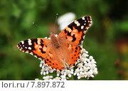 Купить «nature orange blossom bloom insect», фото № 7897872, снято 20 сентября 2019 г. (c) PantherMedia / Фотобанк Лори