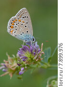 Купить «blue food summer animals butterfly», фото № 7899976, снято 17 июня 2019 г. (c) PantherMedia / Фотобанк Лори