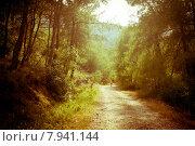 Дорога в лесу. Стоковое фото, фотограф Светлана Чистякова / Фотобанк Лори