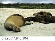 Купить «water sea beach ocean nutrition», фото № 7945304, снято 25 марта 2019 г. (c) PantherMedia / Фотобанк Лори
