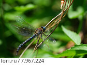 Купить «wing insect insects dragonfly facet», фото № 7967224, снято 26 марта 2019 г. (c) PantherMedia / Фотобанк Лори