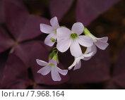 Купить «close up plant flower macro», фото № 7968164, снято 21 сентября 2019 г. (c) PantherMedia / Фотобанк Лори