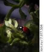 Купить «beetle protected ladybug sheltered stealthy», фото № 7977504, снято 23 марта 2019 г. (c) PantherMedia / Фотобанк Лори