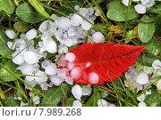 Купить «caucasian green red water light», фото № 7989268, снято 20 сентября 2019 г. (c) PantherMedia / Фотобанк Лори
