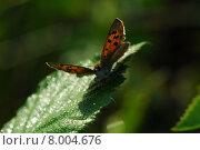 Купить «animal plant animals wing insect», фото № 8004676, снято 17 июня 2019 г. (c) PantherMedia / Фотобанк Лори