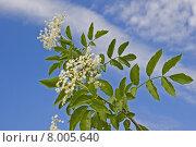 caucasian green healthy sky health. Стоковое фото, фотограф Christa Eder / PantherMedia / Фотобанк Лори