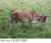 Купить «head neck horn buffalo serengeti», фото № 8031060, снято 21 мая 2018 г. (c) PantherMedia / Фотобанк Лори