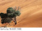 Купить «tree desert bush namib wasteland», фото № 8037100, снято 23 июля 2019 г. (c) PantherMedia / Фотобанк Лори
