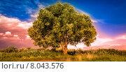 Одинокое дерево. Стоковое фото, фотограф Vladimir Veseliy / Фотобанк Лори