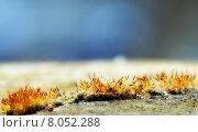 Купить «moss moose bryophyta bryophyton plant», фото № 8052288, снято 20 февраля 2018 г. (c) PantherMedia / Фотобанк Лори