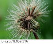 Купить «delicate hairy dandelion filigree sperm», фото № 8059316, снято 21 марта 2019 г. (c) PantherMedia / Фотобанк Лори
