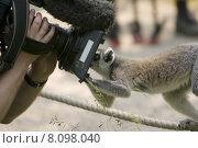 Купить «looking view animal human free», фото № 8098040, снято 16 февраля 2019 г. (c) PantherMedia / Фотобанк Лори
