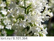 Купить «close up macro spring blossom», фото № 8101364, снято 21 сентября 2019 г. (c) PantherMedia / Фотобанк Лори