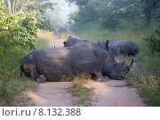 Купить «wild mammal horn rhinoceros rhino», фото № 8132388, снято 22 октября 2018 г. (c) PantherMedia / Фотобанк Лори