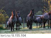 Купить «wild free transport horse stallion», фото № 8155104, снято 24 февраля 2019 г. (c) PantherMedia / Фотобанк Лори