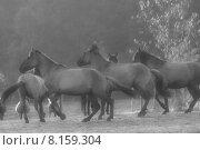 Купить «wild free transport horse escape», фото № 8159304, снято 24 февраля 2019 г. (c) PantherMedia / Фотобанк Лори