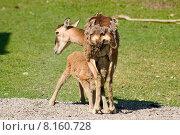 Купить «wild baby newborn neonate suckle», фото № 8160728, снято 24 марта 2019 г. (c) PantherMedia / Фотобанк Лори