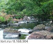 Купить «nature water tree wild river», фото № 8168904, снято 24 февраля 2019 г. (c) PantherMedia / Фотобанк Лори