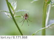 net fear spider retilarian disgust. Стоковое фото, фотограф Martina Berg / PantherMedia / Фотобанк Лори