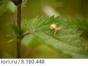 nature green leaf flora fauna. Стоковое фото, фотограф Martina Berg / PantherMedia / Фотобанк Лори