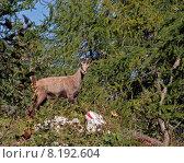 Купить «looking view wild mountain look», фото № 8192604, снято 24 февраля 2019 г. (c) PantherMedia / Фотобанк Лори