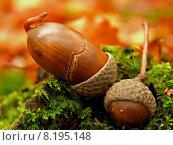 Купить «forest autumn fall woods october», фото № 8195148, снято 15 июля 2020 г. (c) PantherMedia / Фотобанк Лори
