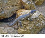 Купить «desert stones dragon hovel saurian», фото № 8229700, снято 23 июля 2019 г. (c) PantherMedia / Фотобанк Лори
