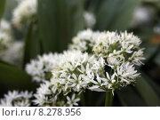 Купить «caucasian green european spring vegetable», фото № 8278956, снято 24 июня 2019 г. (c) PantherMedia / Фотобанк Лори