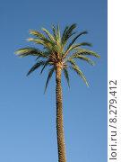Купить «blue tree south trunk palm», фото № 8279412, снято 19 октября 2018 г. (c) PantherMedia / Фотобанк Лори