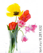 Купить «Tulips», фото № 8281632, снято 24 октября 2018 г. (c) PantherMedia / Фотобанк Лори