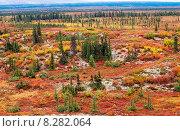 Купить «Tundra landscape in autumn color», фото № 8282064, снято 22 октября 2018 г. (c) PantherMedia / Фотобанк Лори