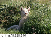 Купить «nature green grass dog meadow», фото № 8328596, снято 23 марта 2019 г. (c) PantherMedia / Фотобанк Лори