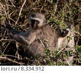 Купить «wildlife apes national park south», фото № 8334912, снято 19 октября 2018 г. (c) PantherMedia / Фотобанк Лори