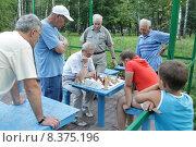 Купить «Балашиха, шахматисты в городском парке летом», эксклюзивное фото № 8375196, снято 26 июля 2015 г. (c) Дмитрий Неумоин / Фотобанк Лори