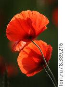 Купить «spring field reflection meadow poppy», фото № 8389216, снято 19 октября 2019 г. (c) PantherMedia / Фотобанк Лори