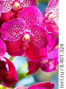 Красивая розовая орхидея. Стоковое фото, фотограф Оксана Дорохина / Фотобанк Лори