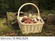 Купить «dog arm basket fruits knife», фото № 8442624, снято 24 февраля 2018 г. (c) PantherMedia / Фотобанк Лори