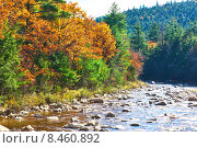 Купить «Swift River at autumn», фото № 8460892, снято 20 октября 2014 г. (c) Николай Охитин / Фотобанк Лори