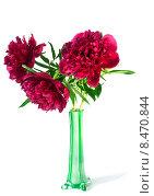 Купить «Три пиона в вазе на белом фоне», фото № 8470844, снято 26 мая 2015 г. (c) Короленко Елена / Фотобанк Лори