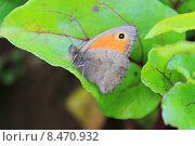 Бабочка на растении. Стоковое фото, фотограф Аня Шумкова / Фотобанк Лори