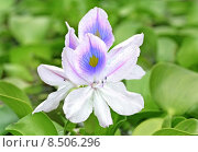 Купить «water plant flower blossom bloom», фото № 8506296, снято 22 июля 2018 г. (c) PantherMedia / Фотобанк Лори