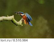 Купить «nature blue orange turquoise disposition», фото № 8510984, снято 24 мая 2019 г. (c) PantherMedia / Фотобанк Лори
