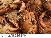 Купить «Seafood freshly caught sea», фото № 8526940, снято 19 января 2019 г. (c) PantherMedia / Фотобанк Лори