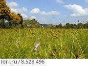 Купить «bavaria autumn timeless kallm nz», фото № 8528496, снято 21 августа 2019 г. (c) PantherMedia / Фотобанк Лори